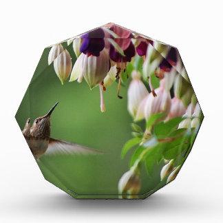 Hummingbird and Fushia Plant Award