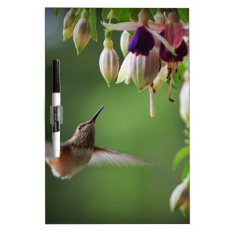 Hummingbird and Fushia Plant Dry-Erase Board