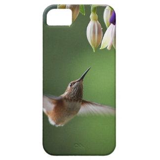 Hummingbird and Fushia Plant iPhone 5 Cases