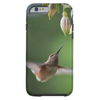 Hummingbird and Fushia Plant iPhone 6 Case