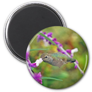 Hummingbird and Mexican Sage II 2 Inch Round Magnet