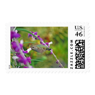 Hummingbird and Mexican Sage II Stamp