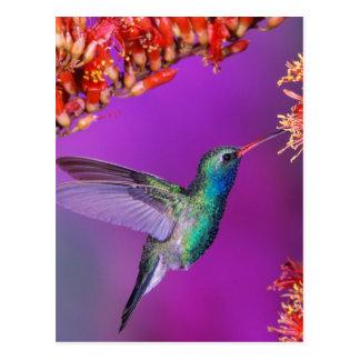 Hummingbird And Orange Flowers Postcard
