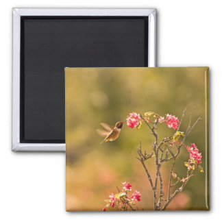 Hummingbird and Pink Flowers Magnet
