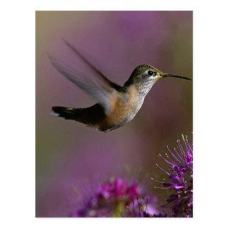 Hummingbird And Purple Flowers Postcard