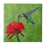 """Hummingbird and Red Zinnia Ceramic Tiles<br><div class=""""desc"""">Ceramic tiles with a beautiful ruby-throated hummingbird feeding on a red zinnia with a green background.  Great gift for a bird lover! Digital photography by Sue Melvin</div>"""