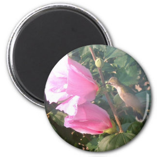 Hummingbird and Rose of Sharon 2 Inch Round Magnet