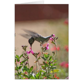Hummingbird And Snapdragons Card
