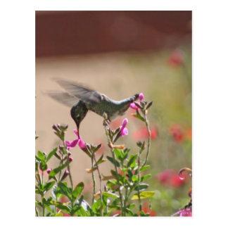 Hummingbird And Snapdragons Postcard