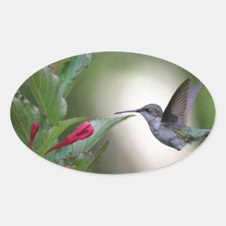 Hummingbird and weigela oval sticker