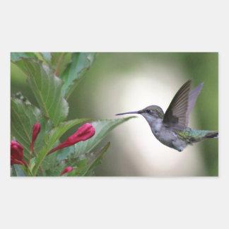 Hummingbird and weigela rectangular sticker