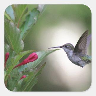 Hummingbird and weigela square sticker