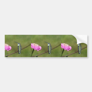 Hummingbird and Zinnia Bumper Sticker