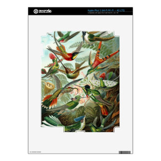Hummingbird Antique Print iPad 3 Decal