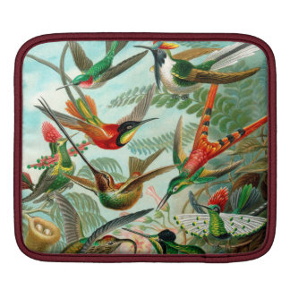 Hummingbird Antique Print iPad Sleeve