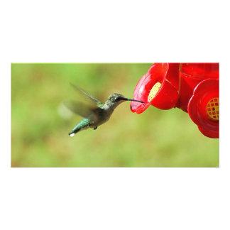 Hummingbird at a feeder card