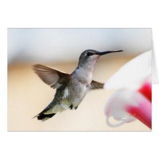 Hummingbird at Feeder Greeting Card