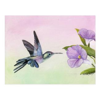 Hummingbird at Morning Glory bird art Postcard
