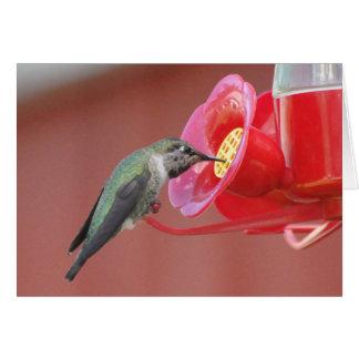 Hummingbird at the Feeder Greeting Card