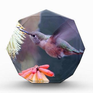 Hummingbird Award