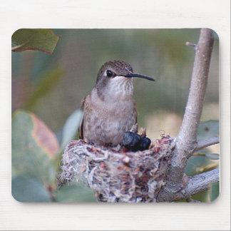 Hummingbird Babies 2 Mouse Pad