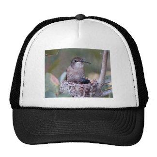 Hummingbird Babies 2 Trucker Hat