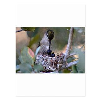 Hummingbird Babies Postcard