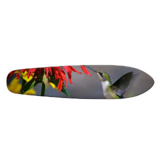 Hummingbird Beauty Skateboard