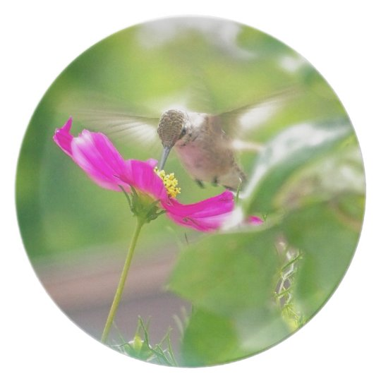 Hummingbird Bird Floral Animal Wildlife Flower Dinner Plate