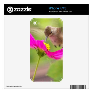 Hummingbird Bird Floral Wildlife Animal Flower Decals For The iPhone 4
