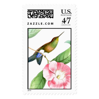Hummingbird Bird Flower Floral Postage