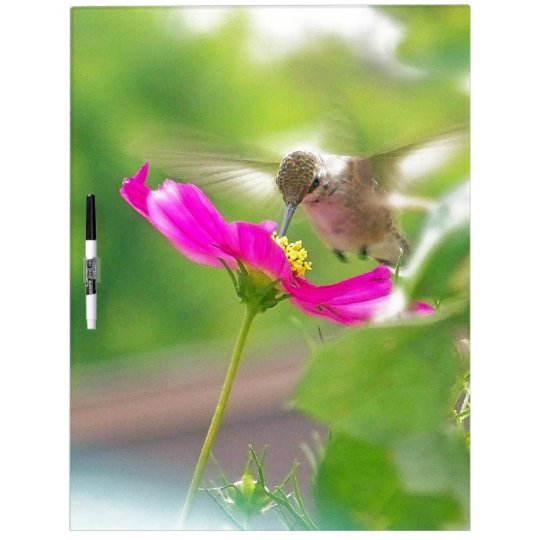 Hummingbird Bird Flowers Wildlife Floral Animals Dry-Erase Board