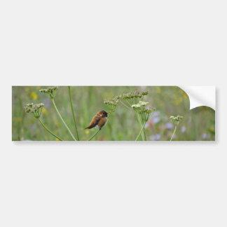 Hummingbird: Bird in Flowers Bumper Sticker