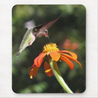Hummingbird Bird Sunflower Flower Floral Garden Mouse Pad