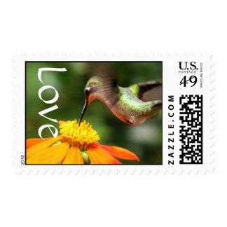 Hummingbird Bird Sunflower Flower Floral Garden Postage