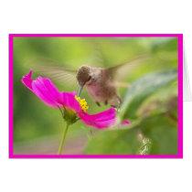 Hummingbird Bird Wildlife Animal Floral