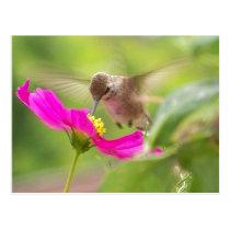 Hummingbird Bird Wildlife Animal Floral Postcard