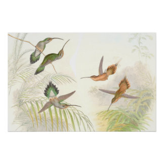 Hummingbird Bird Wildlife Animals Leaves Poster