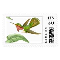 Hummingbird Birds Flowers Floral Wildlife Animals Postage