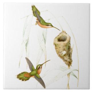 Hummingbird Birds Wildlife Animals Nest Ceramic Tile