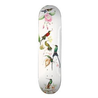 Hummingbird Birds Wildlife Animals Skateboard