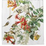 shower curtain, birds, wildlife, animals, audubon,