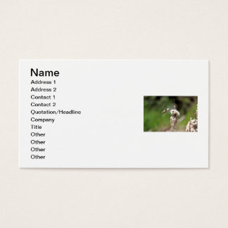 Hummingbird Building a Nest Business Card