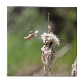 Hummingbird Building a Nest Tiles