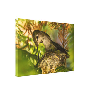 Hummingbird Builds a Nest- Wrapped Canvas Print