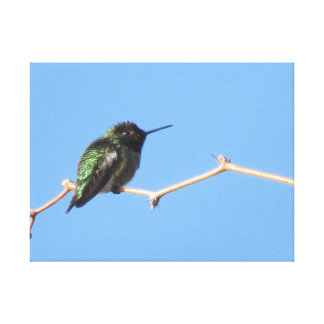 Hummingbird Gallery Wrap Canvas