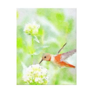 Hummingbird Canvas Prints