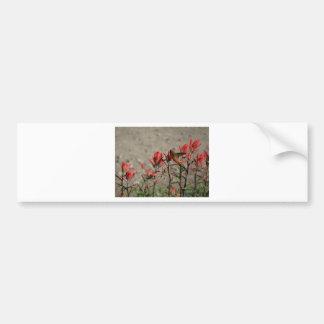 Hummingbird cardinal flowers bumper sticker