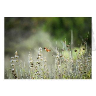 Hummingbird Cards