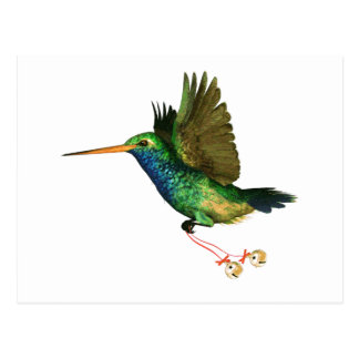 Hummingbird Christmas Postcard